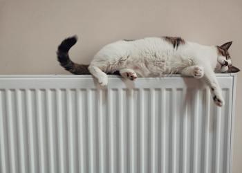 Positive cultural radiators